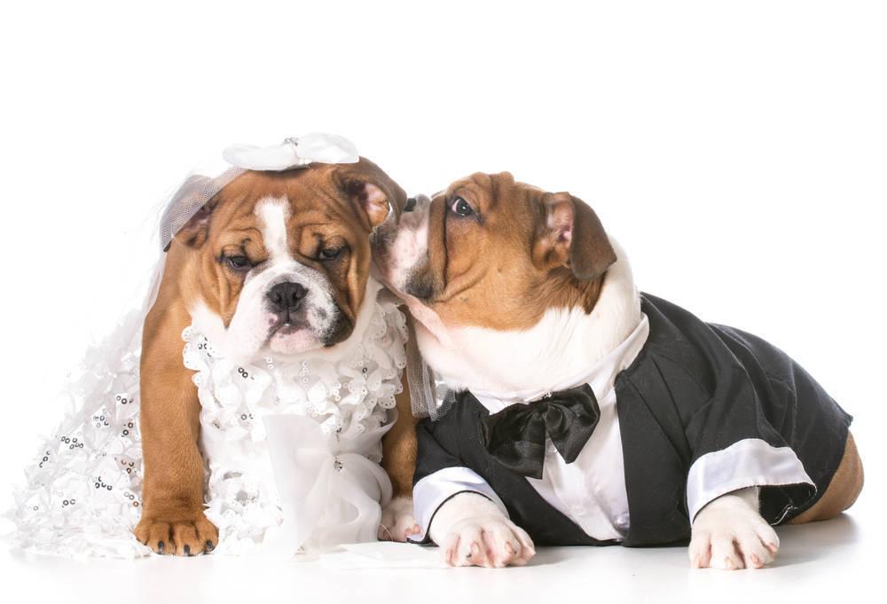 Vestir a nuestras mascotas, ¿moda o necesidad?