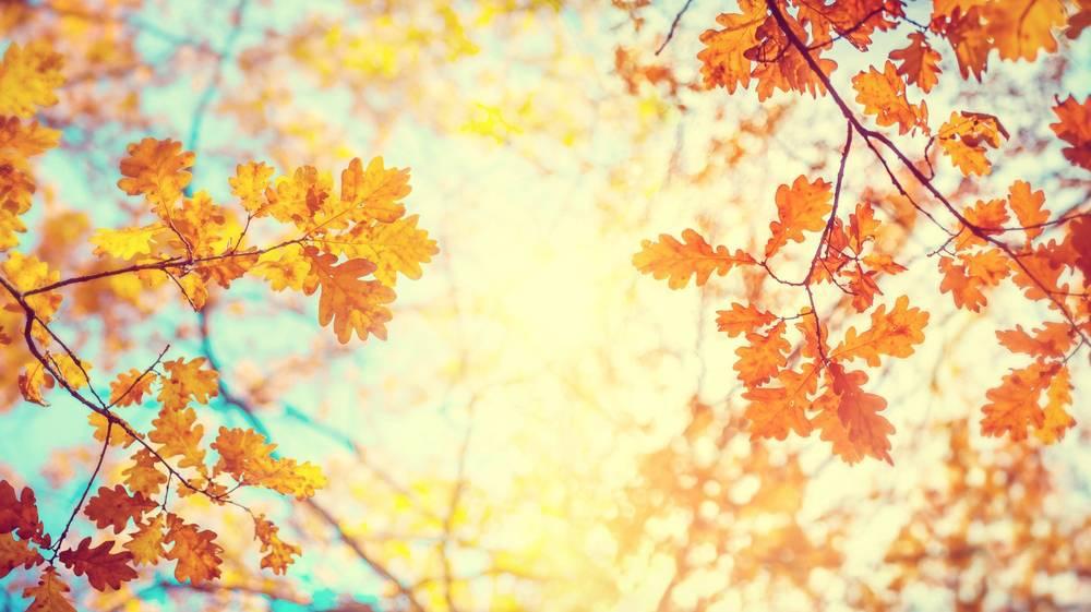 Octubre, un mes perfecto para tomar un respiro