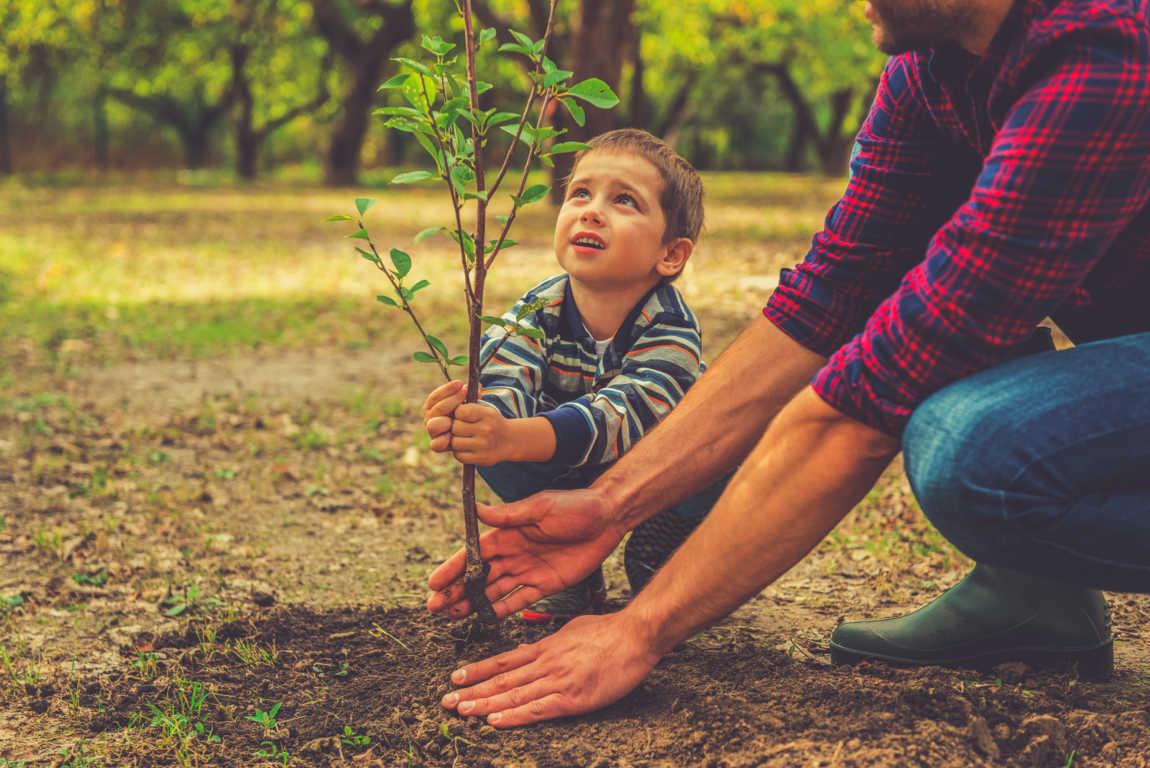 Cómo evitar daños, enfermedades y plagas en nuestras plantas