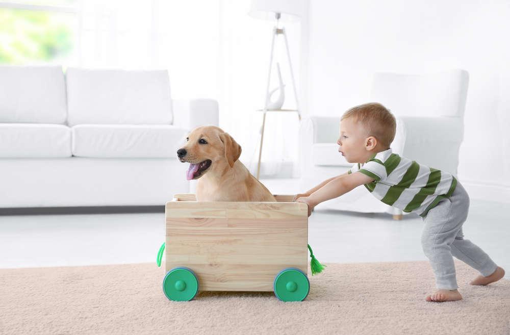 Niños y animales de compañía: una relación que no se debe separar ni siquiera en vacaciones